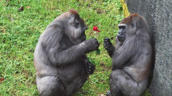Belfast Zoological Gardens
