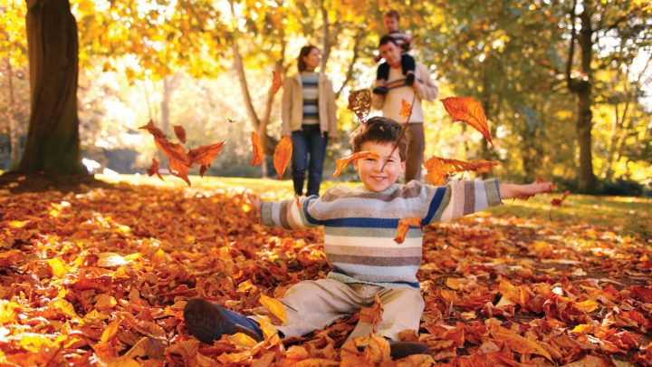 Child Playing in Autumn Leaves at Dixon Park