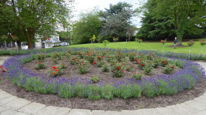 Stormont EstateRose garden