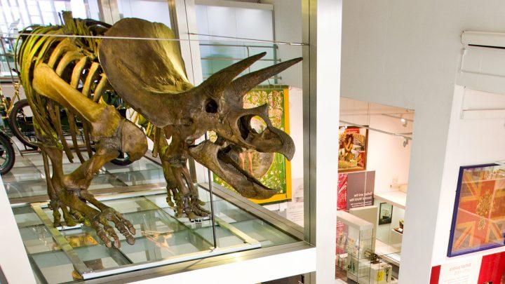 Triceratops Dinosaur at Ulster Museum