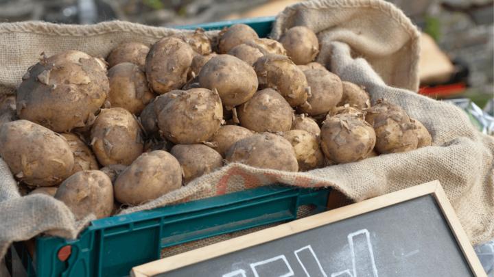 Hillsborough Farmers Market 6